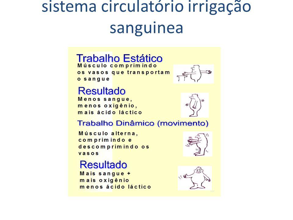 sistema circulatório irrigação sanguinea