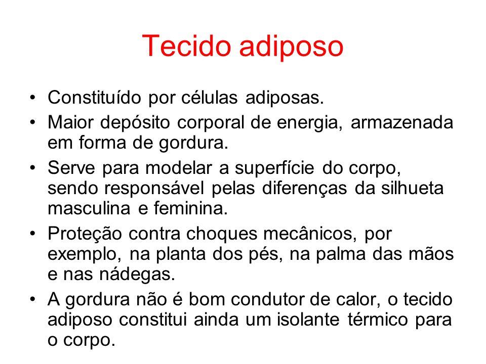 Tecido adiposo Constituído por células adiposas.