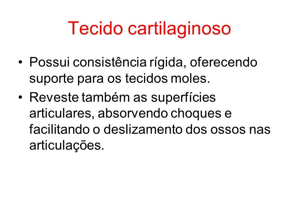 Tecido cartilaginoso Possui consistência rígida, oferecendo suporte para os tecidos moles.