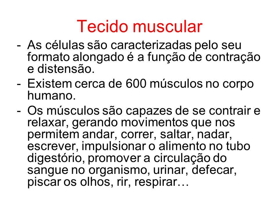 Tecido muscular As células são caracterizadas pelo seu formato alongado é a função de contração e distensão.