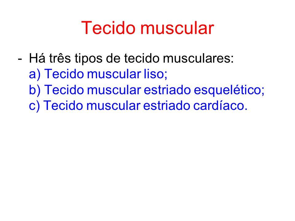 Tecido muscular Há três tipos de tecido musculares: