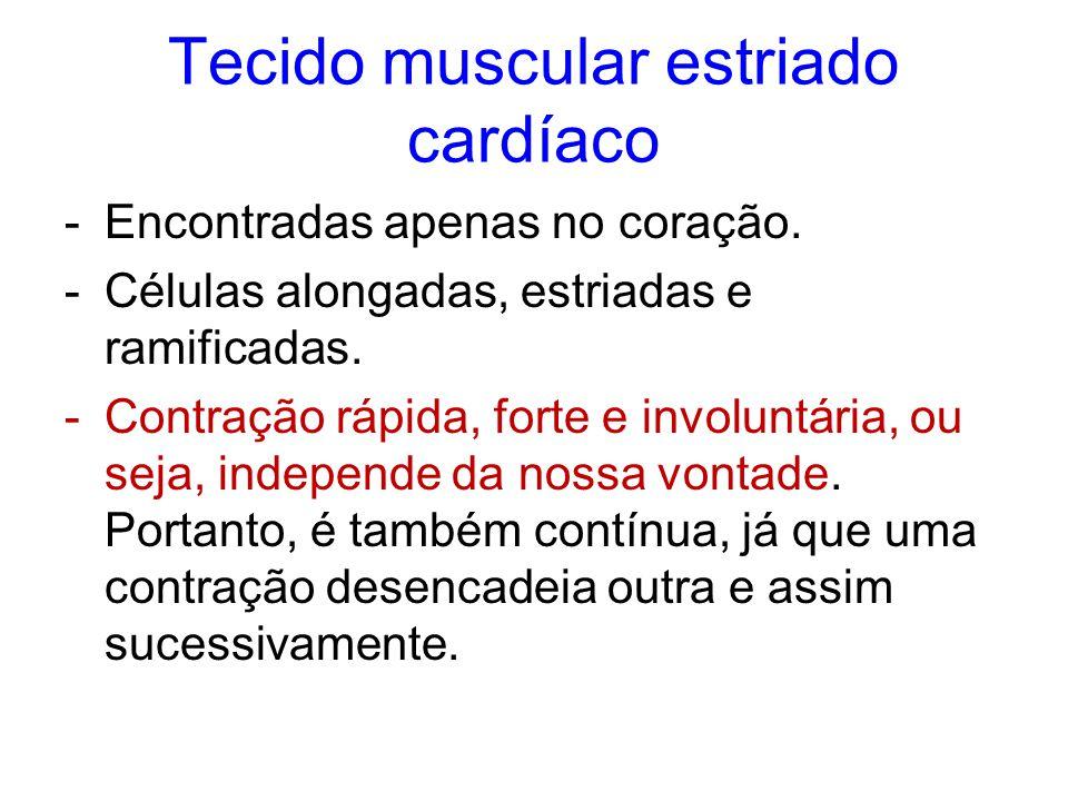 Tecido muscular estriado cardíaco