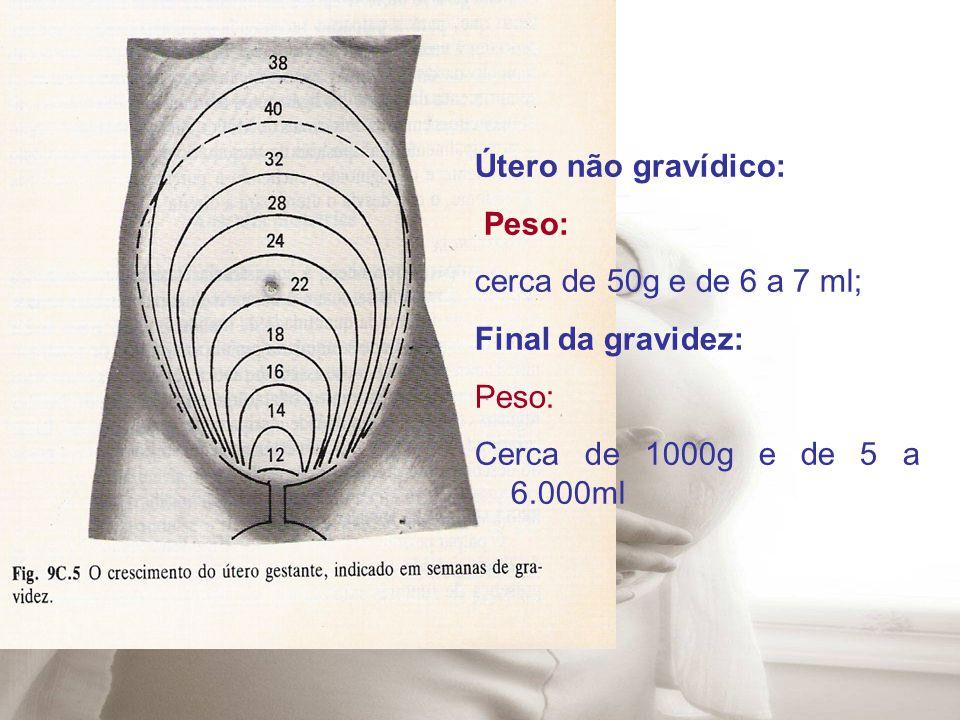 Útero não gravídico: Peso: cerca de 50g e de 6 a 7 ml; Final da gravidez: Cerca de 1000g e de 5 a 6.000ml.