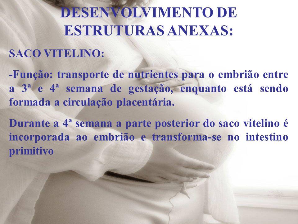 DESENVOLVIMENTO DE ESTRUTURAS ANEXAS: