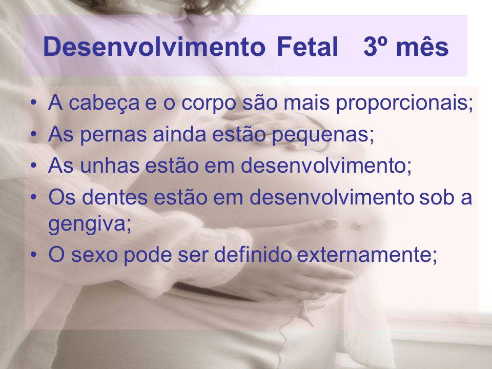 Desenvolvimento Fetal 3º mês