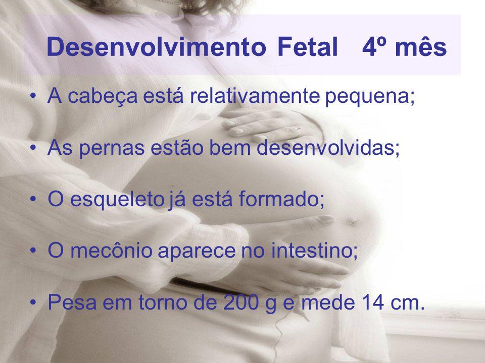 Desenvolvimento Fetal 4º mês