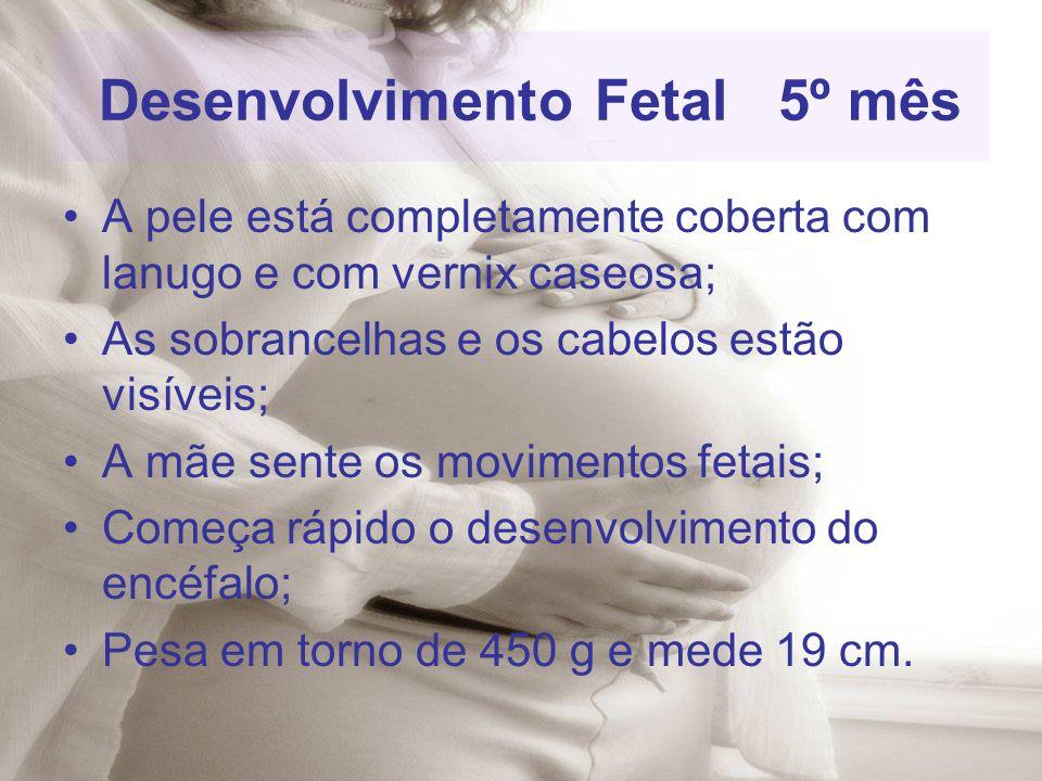 Desenvolvimento Fetal 5º mês