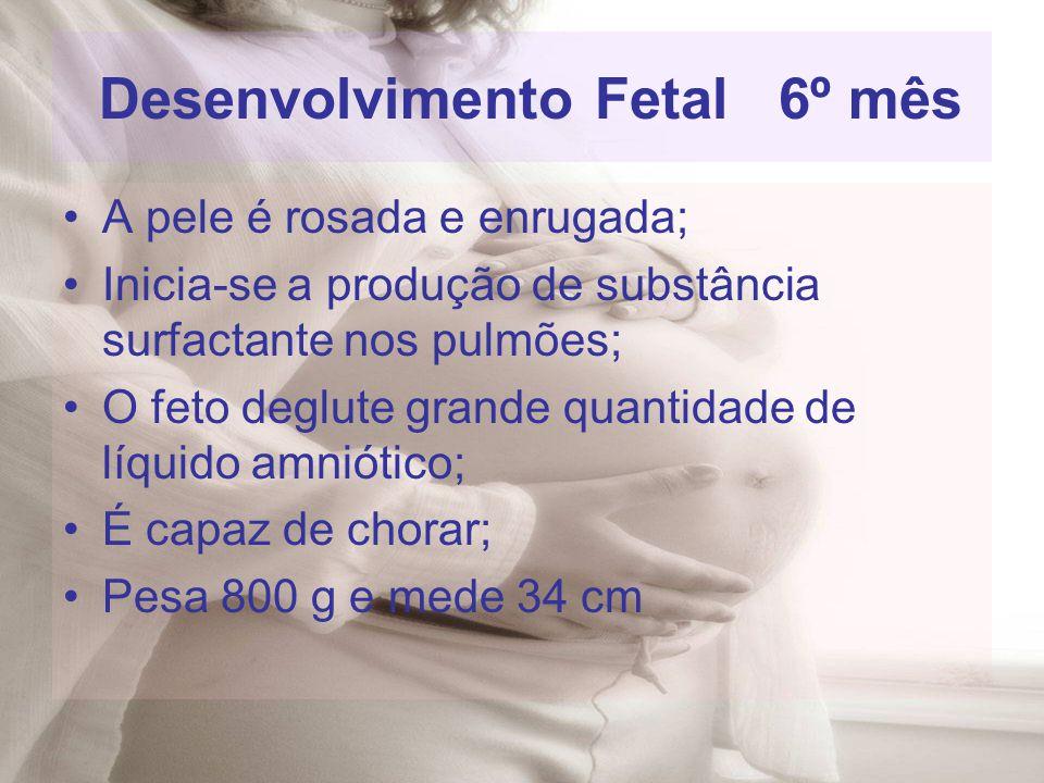 Desenvolvimento Fetal 6º mês