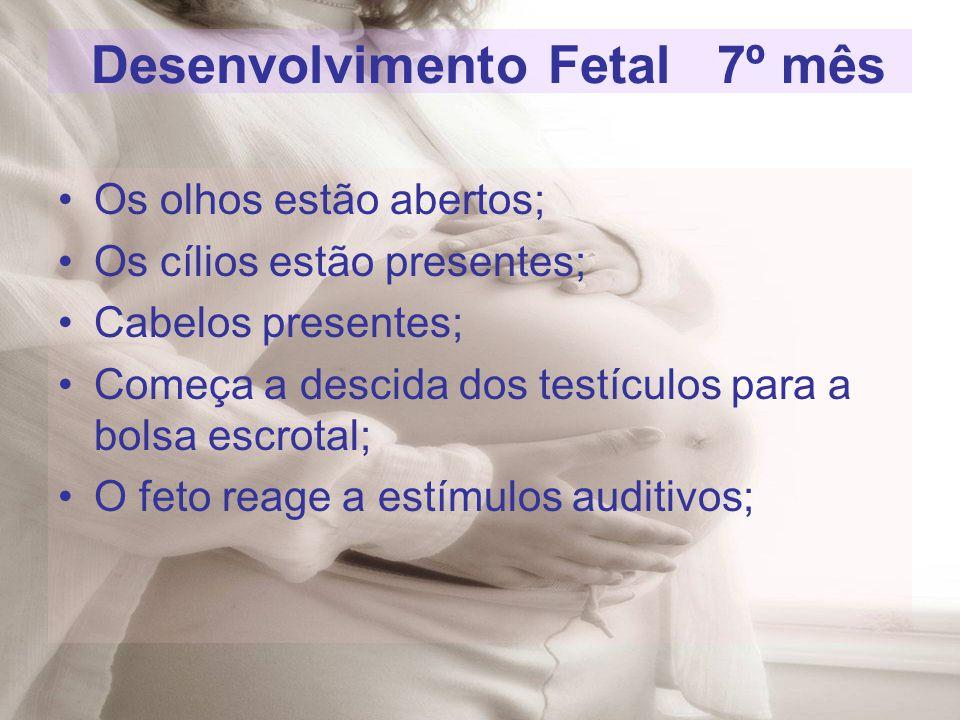 Desenvolvimento Fetal 7º mês