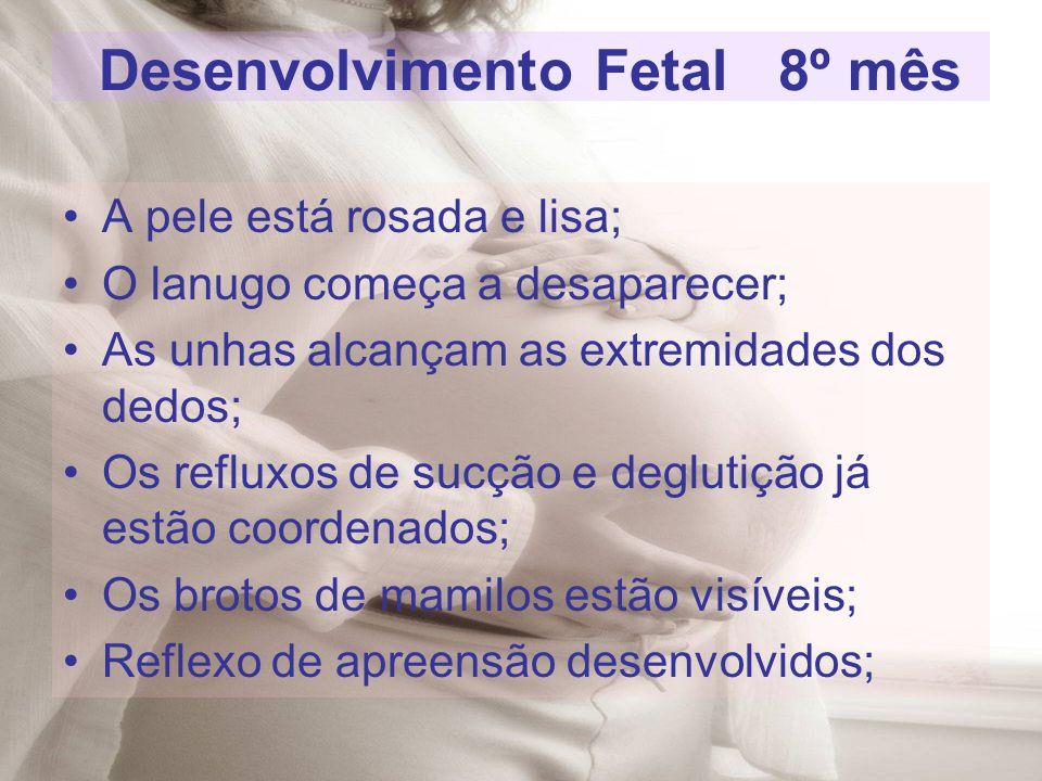 Desenvolvimento Fetal 8º mês