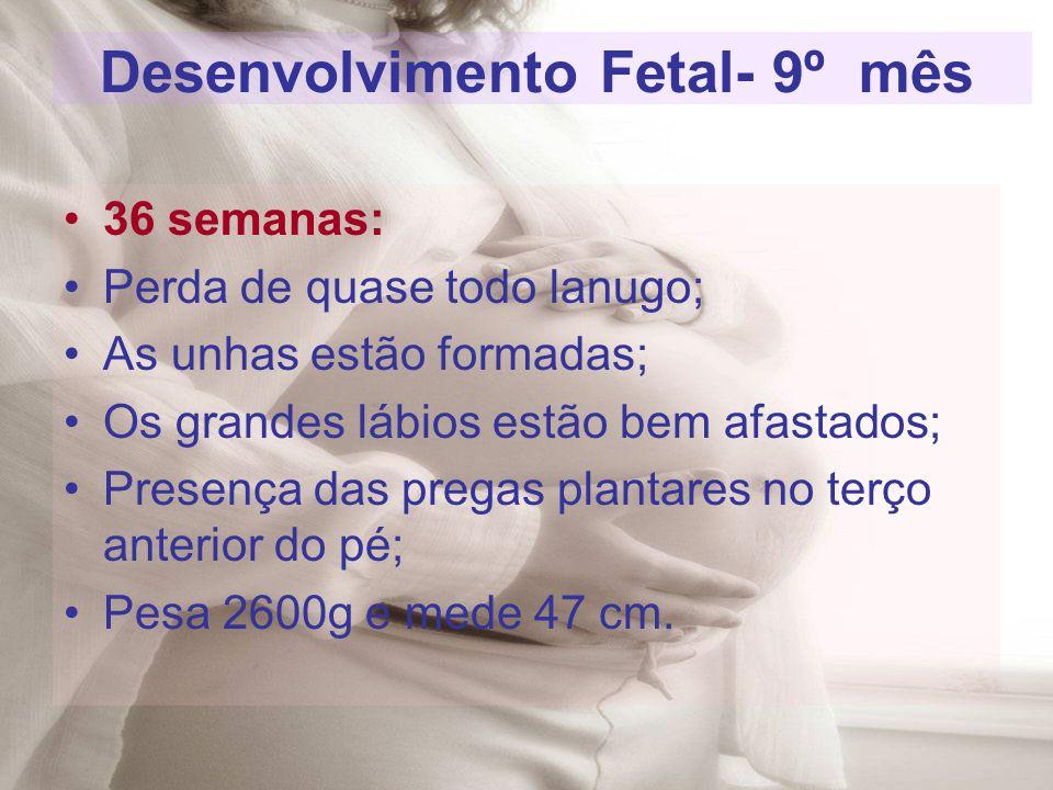Desenvolvimento Fetal- 9º mês