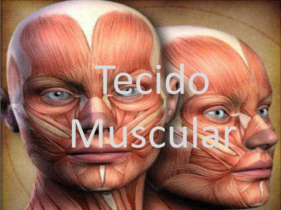 Tecido Muscular