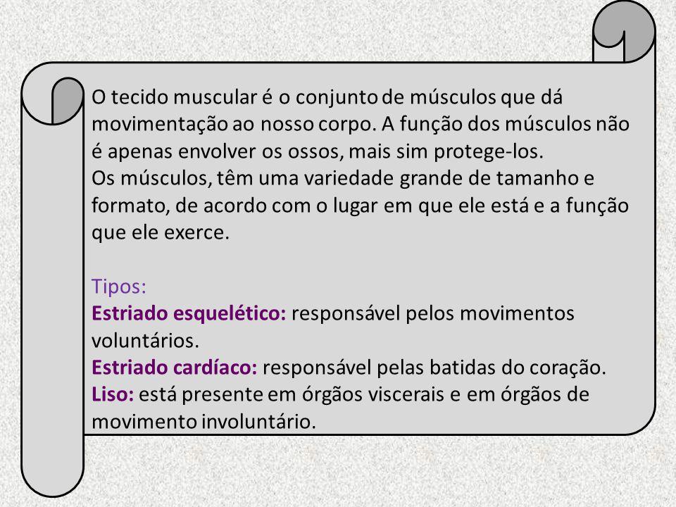 O tecido muscular é o conjunto de músculos que dá movimentação ao nosso corpo. A função dos músculos não é apenas envolver os ossos, mais sim protege-los.