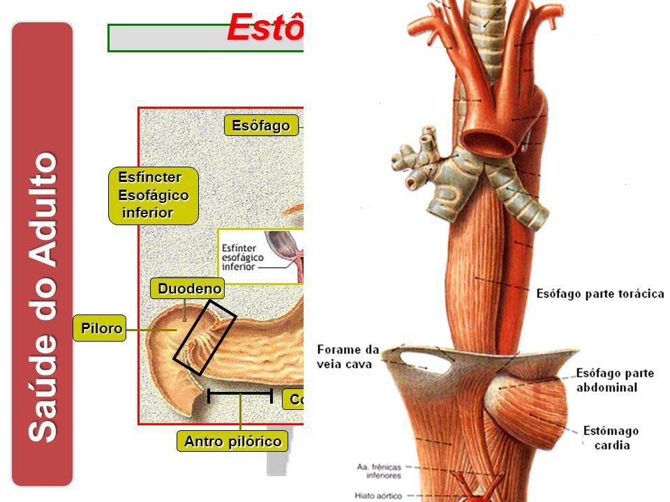 Estômago Saúde do Adulto Acomodação + 200ml até 2 L Ondulatório