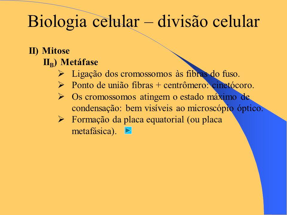 Biologia celular – divisão celular