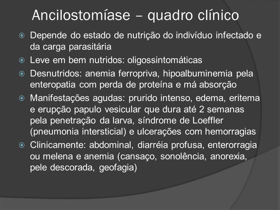 Ancilostomíase – quadro clínico