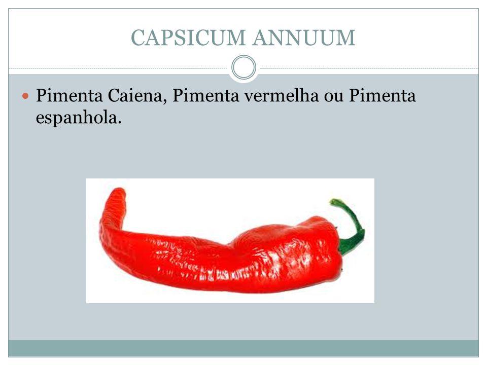CAPSICUM ANNUUM Pimenta Caiena, Pimenta vermelha ou Pimenta espanhola.