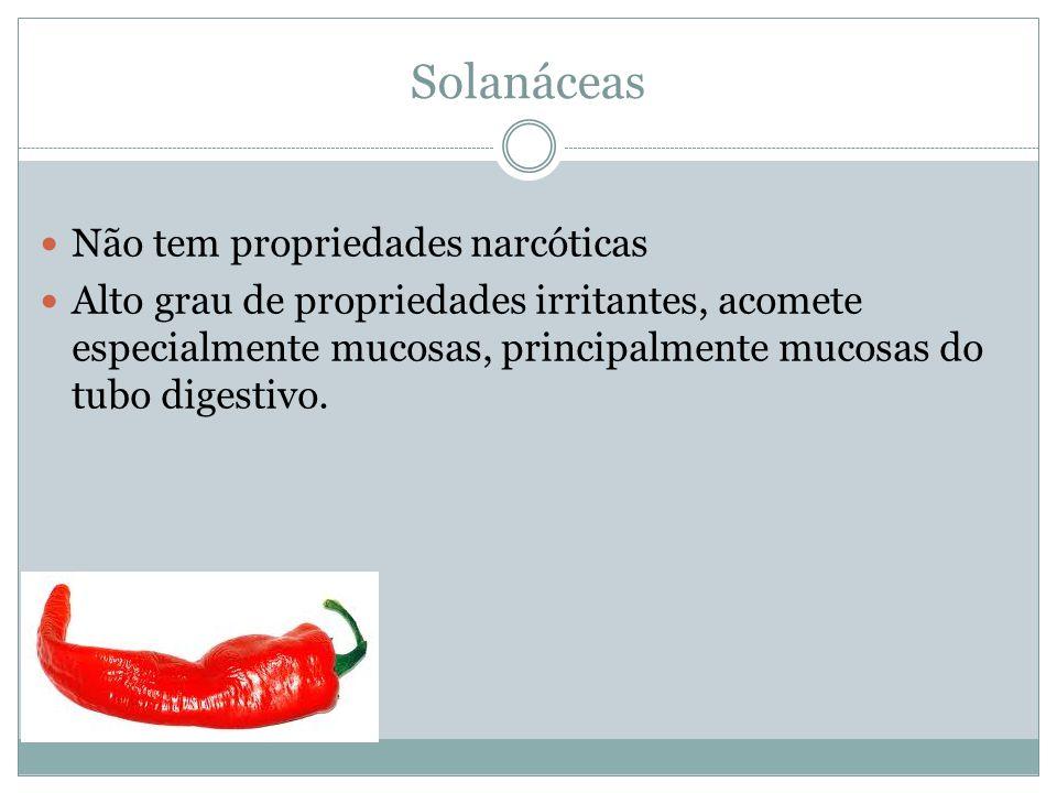 Solanáceas Não tem propriedades narcóticas