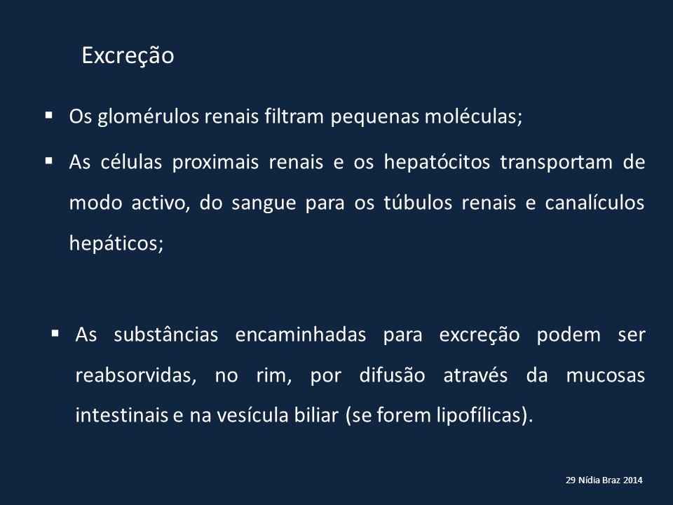 Excreção Os glomérulos renais filtram pequenas moléculas;