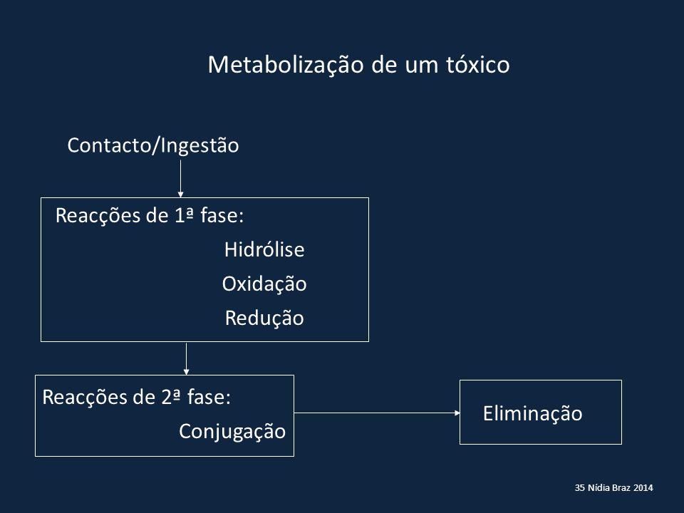Metabolização de um tóxico