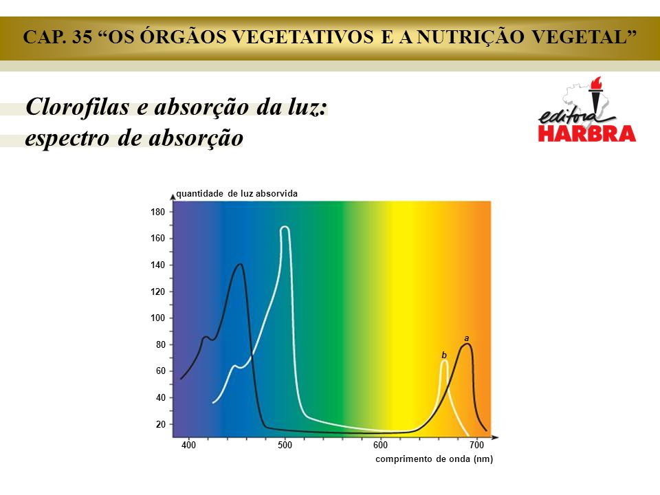 CAP. 35 OS ÓRGÃOS VEGETATIVOS E A NUTRIÇÃO VEGETAL
