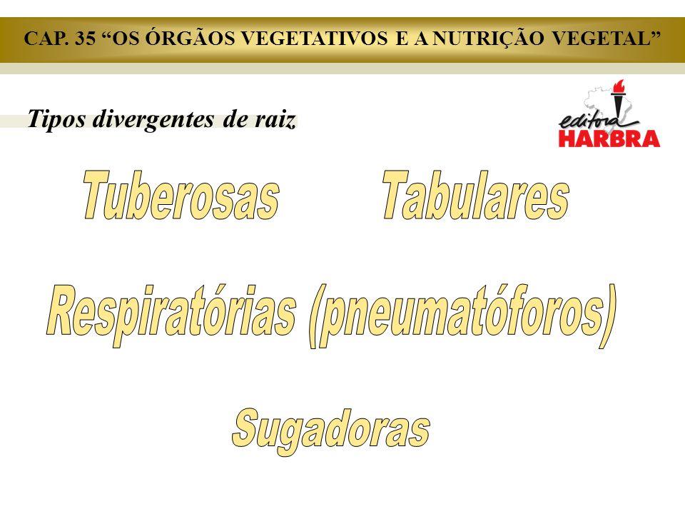 Tuberosas Tabulares Respiratórias (pneumatóforos) Sugadoras