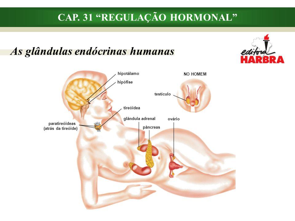 CAP. 31 REGULAÇÃO HORMONAL