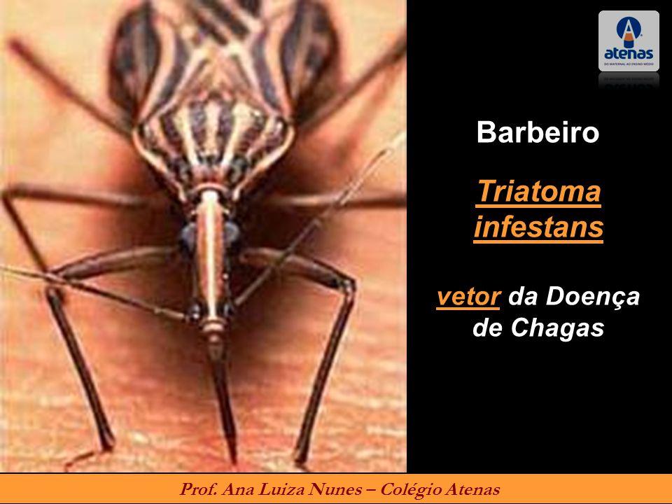 vetor da Doença de Chagas Prof. Ana Luiza Nunes – Colégio Atenas