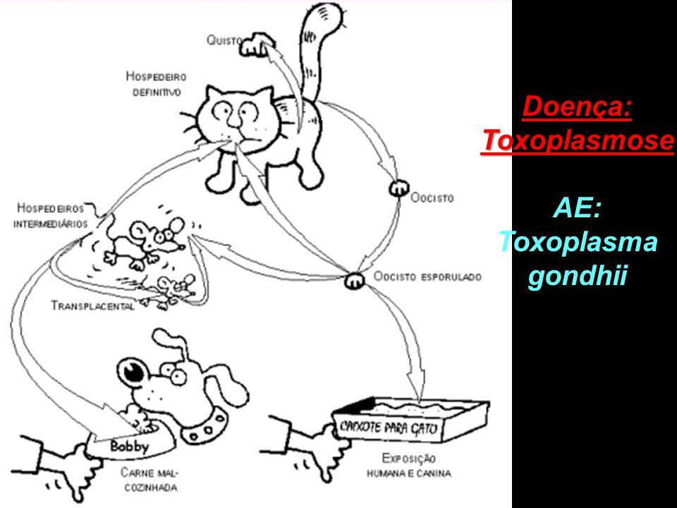 AE: Toxoplasma gondhii