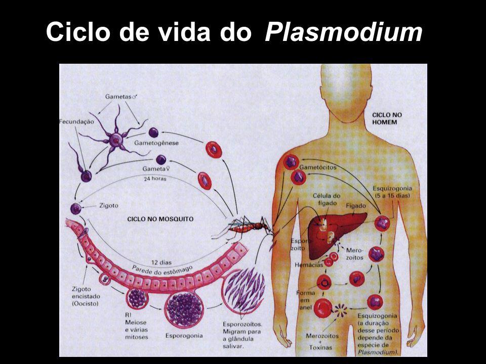 Ciclo de vida do Plasmodium