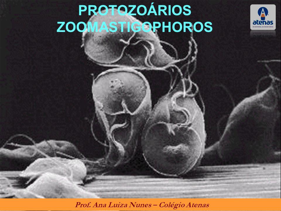 PROTOZOÁRIOS ZOOMASTIGOPHOROS Prof. Ana Luiza Nunes – Colégio Atenas