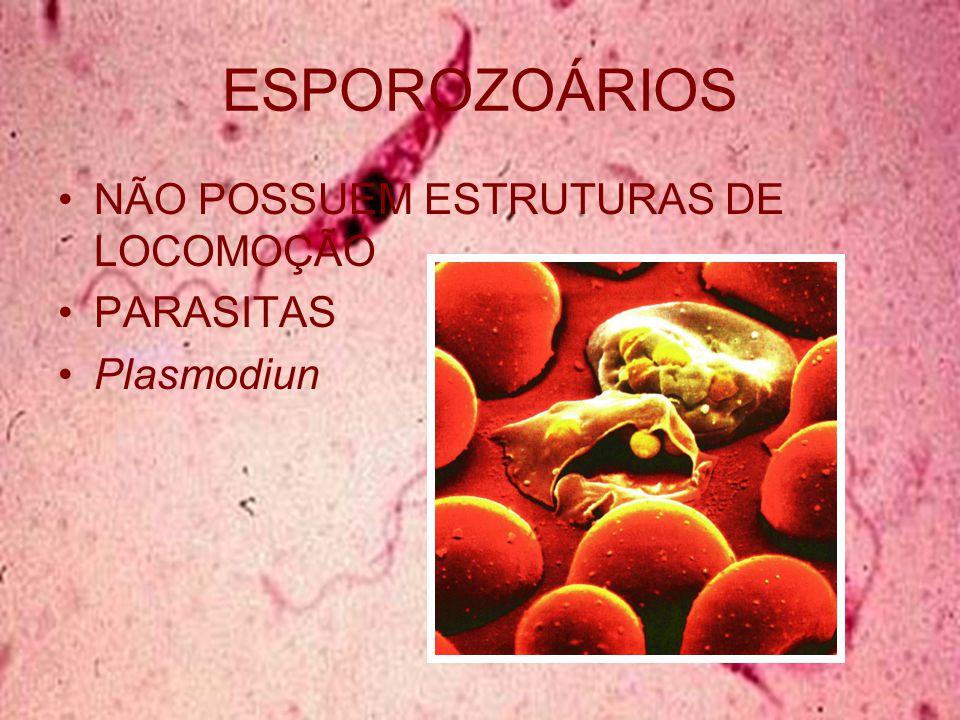 ESPOROZOÁRIOS NÃO POSSUEM ESTRUTURAS DE LOCOMOÇÃO PARASITAS Plasmodiun