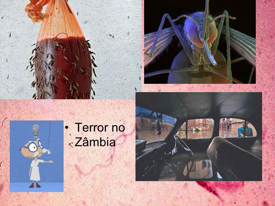 Terror no Zâmbia