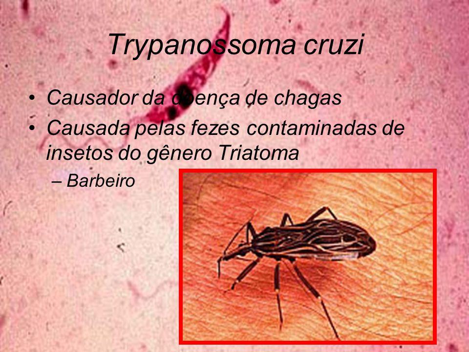 Trypanossoma cruzi Causador da doença de chagas