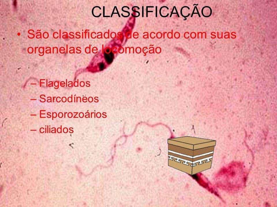 CLASSIFICAÇÃO São classificados de acordo com suas organelas de locomoção. Flagelados. Sarcodíneos.