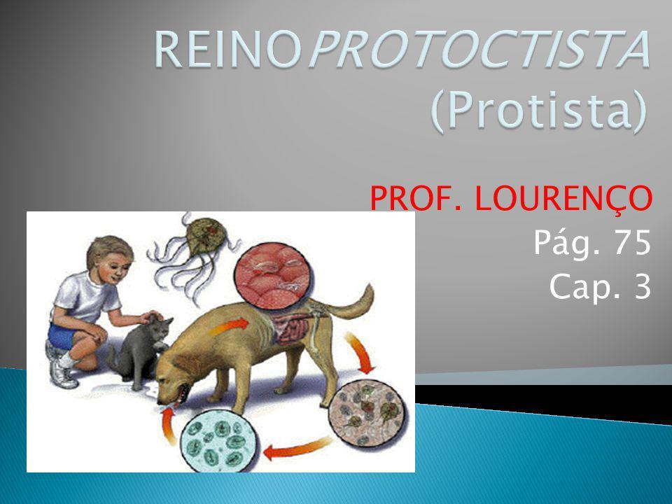REINOPROTOCTISTA (Protista)