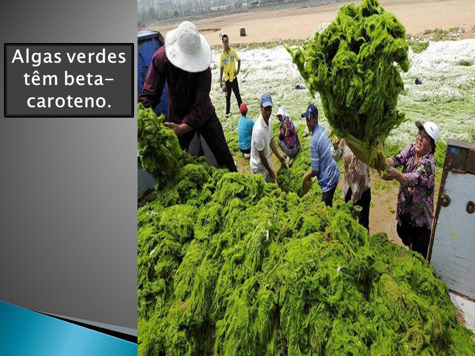 Algas verdes têm beta-caroteno.