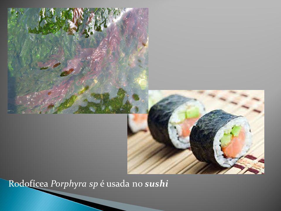 Rodofícea Porphyra sp é usada no sushi