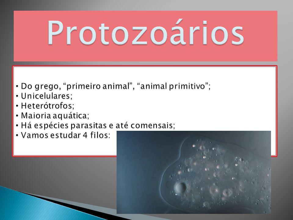 Protozoários Do grego, primeiro animal , animal primitivo ;