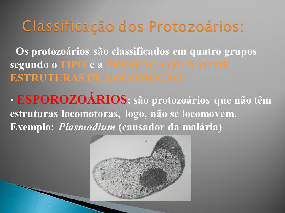 Classificação dos Protozoários: