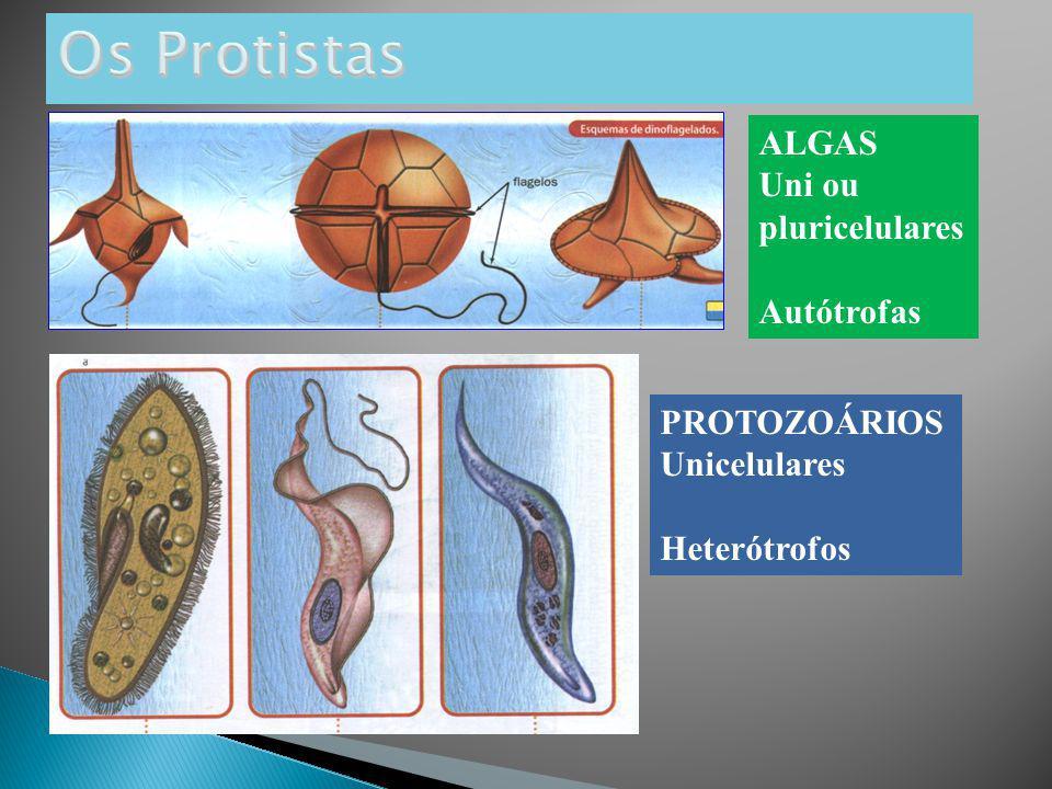 Os Protistas ALGAS Uni ou pluricelulares Autótrofas PROTOZOÁRIOS
