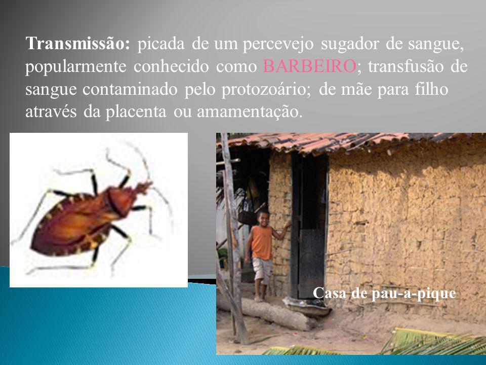 Transmissão: picada de um percevejo sugador de sangue, popularmente conhecido como BARBEIRO; transfusão de sangue contaminado pelo protozoário; de mãe para filho através da placenta ou amamentação.