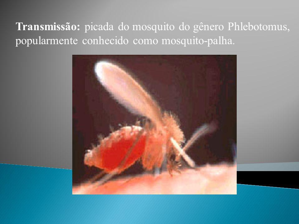 Transmissão: picada do mosquito do gênero Phlebotomus, popularmente conhecido como mosquito-palha.