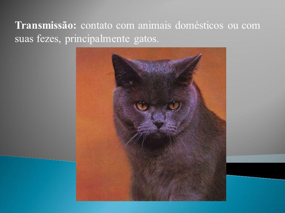 Transmissão: contato com animais domésticos ou com suas fezes, principalmente gatos.