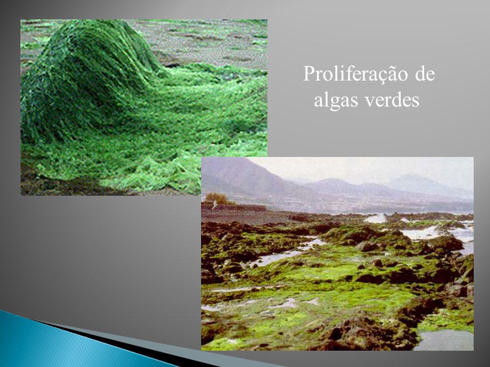 Proliferação de algas verdes