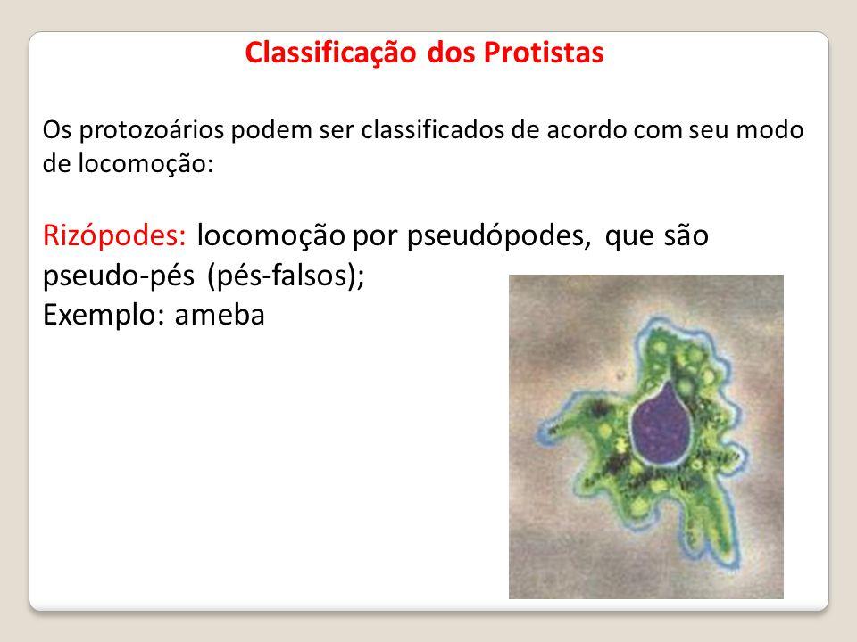 Classificação dos Protistas