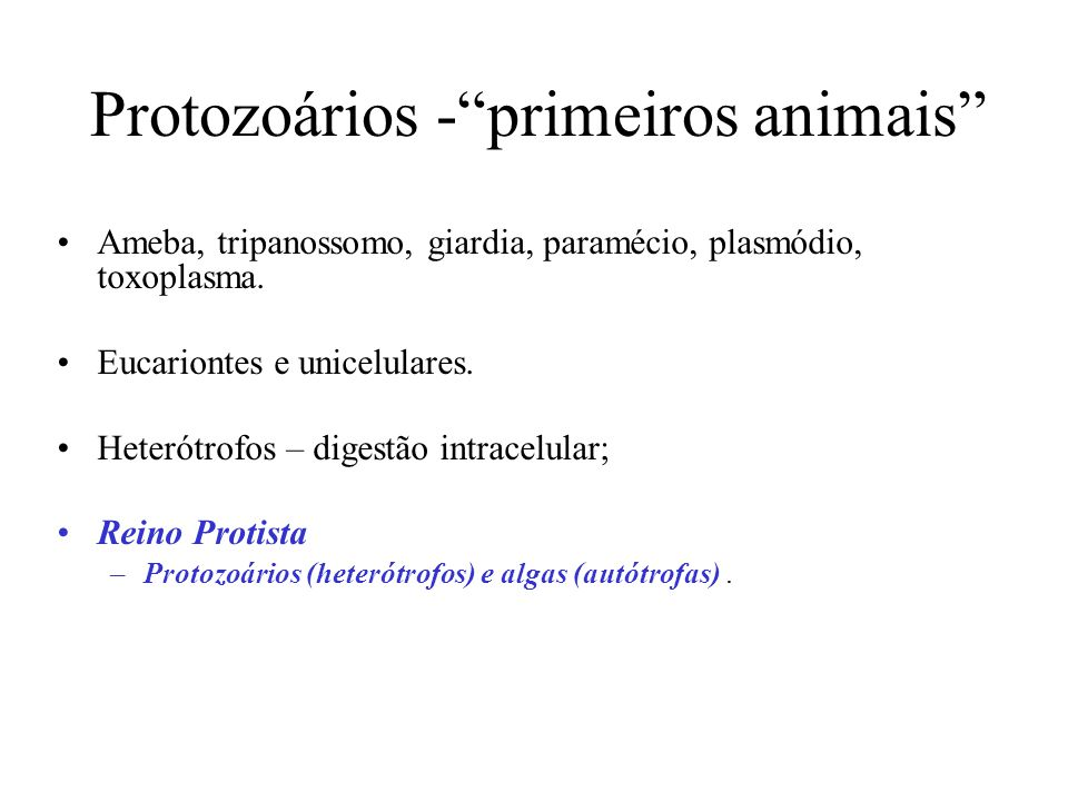 Protozoários - primeiros animais