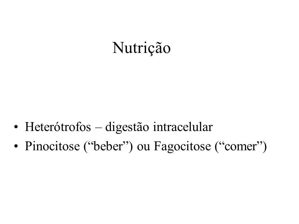 Nutrição Heterótrofos – digestão intracelular