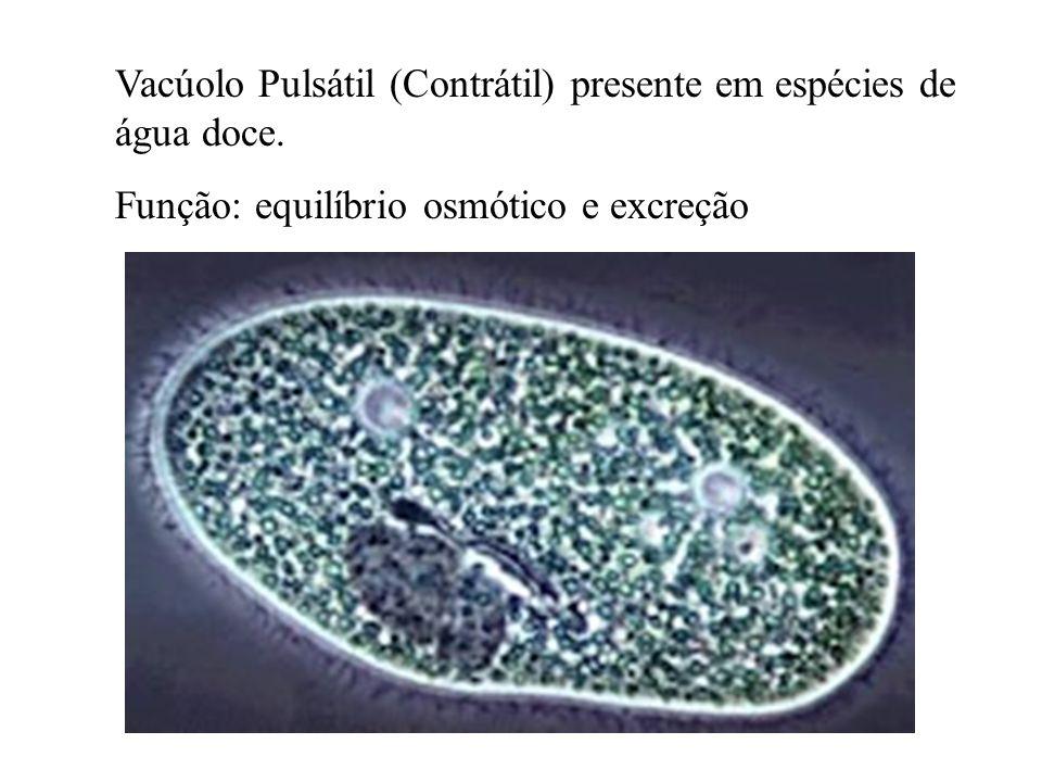 Vacúolo Pulsátil (Contrátil) presente em espécies de água doce.