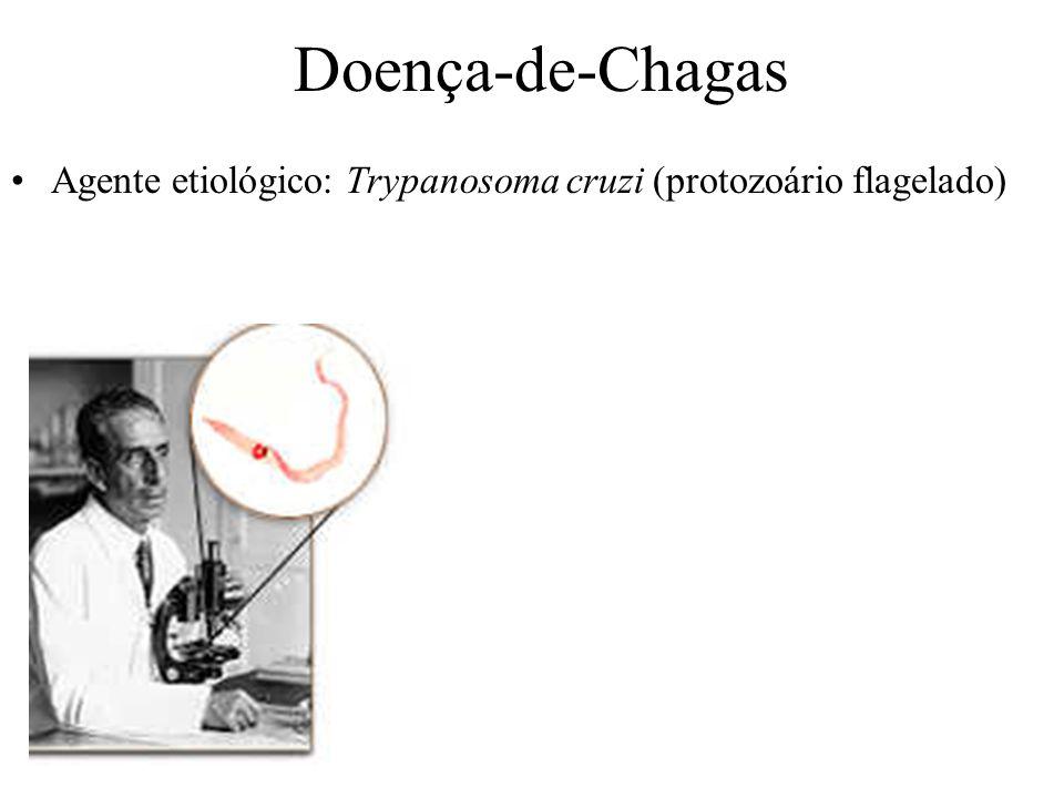 Doença-de-Chagas Agente etiológico: Trypanosoma cruzi (protozoário flagelado)